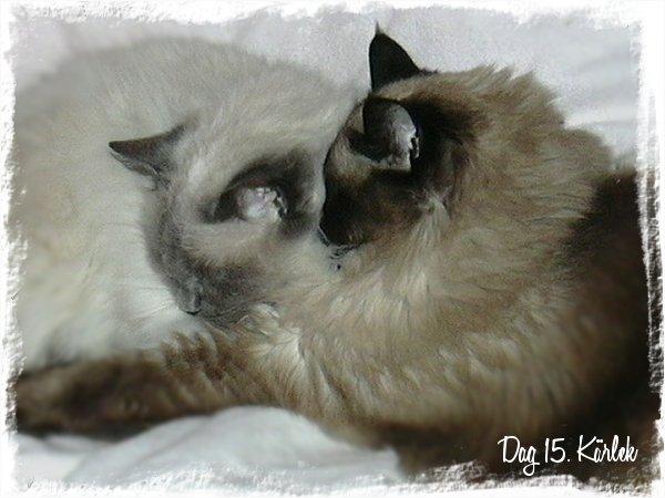 Duttis och Mipan