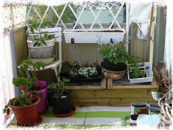 """""""Hörnan"""" med bl.a. nyplanterade tomater"""
