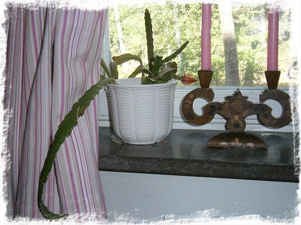 Hela kaktusen