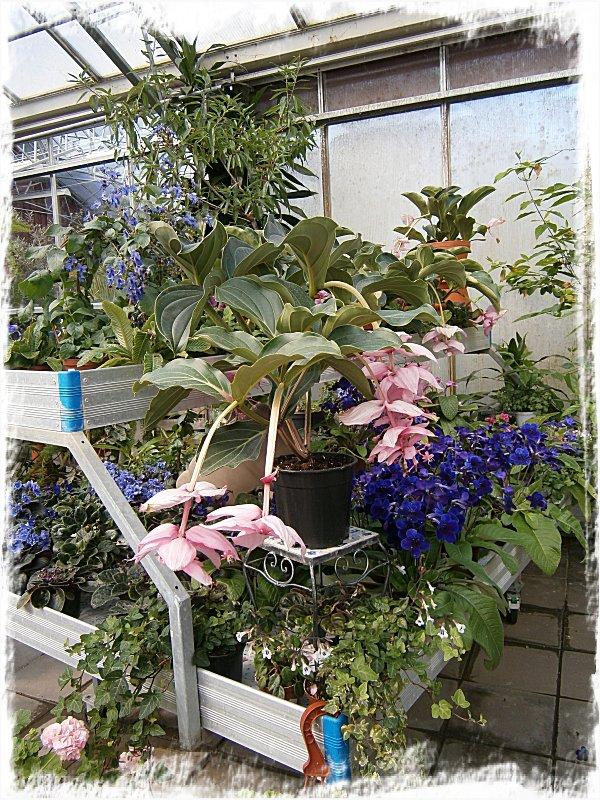 Blandade växter