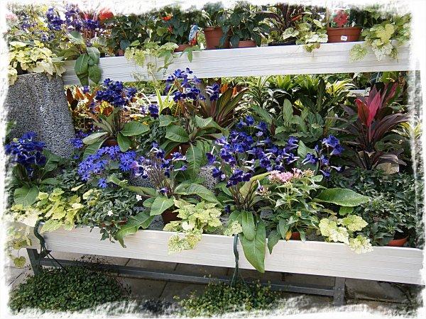 Lysande blålila blommor