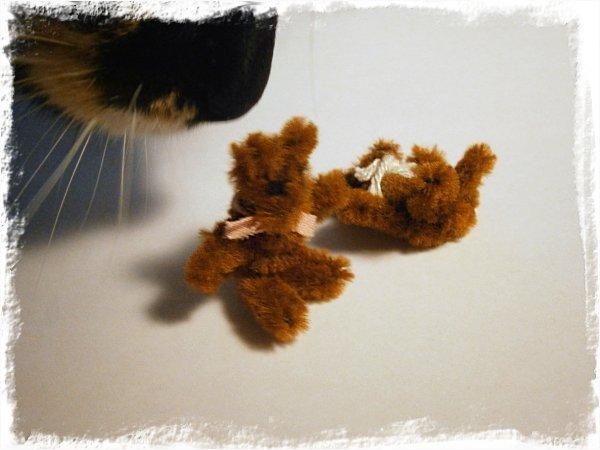 Nallar av pirensare OCH en kattnos