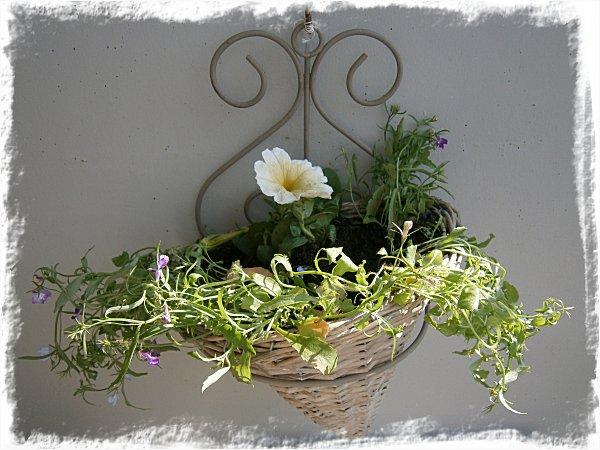 Petunia och hänglobelior