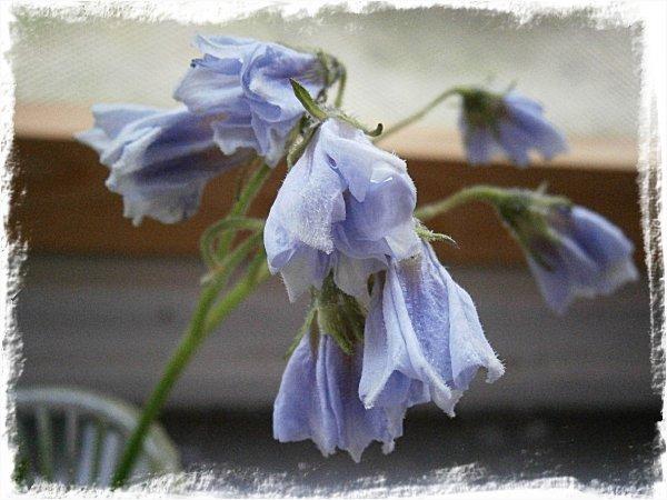Blåa blommor