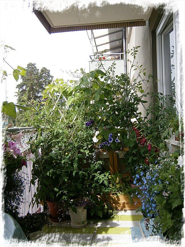 Tomater, rosenbönor och odlingslådan med bär och grönt.