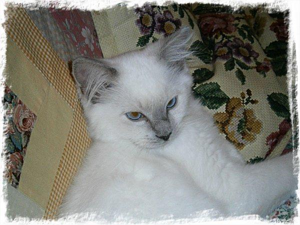 En katt (som heter Måns)