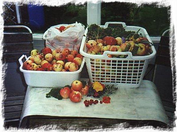 Min äppelskörd 1997