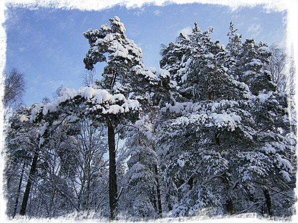 Nu börjar jag snart få ont om saker att skriva om snön