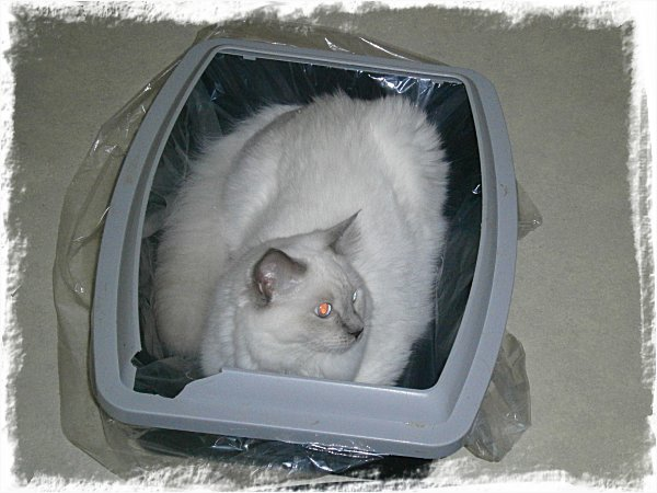 Förvaringslåda för katter