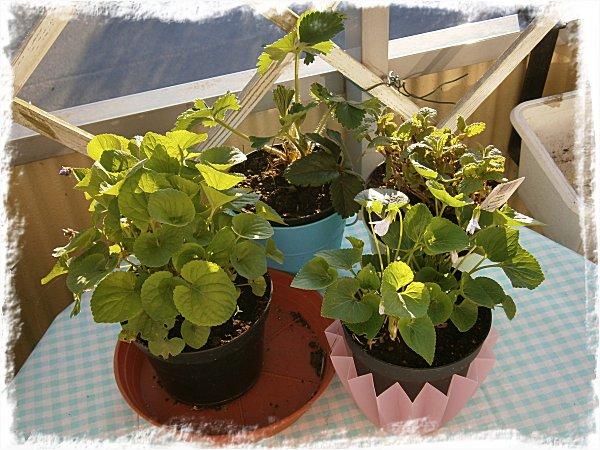 Plantorna på bordet