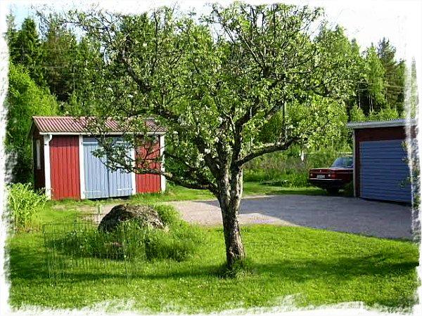 Äppelträdet