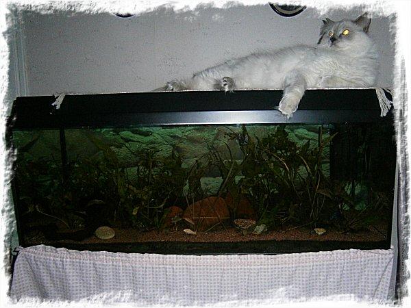 Hela akvariet - extremt mysko ljusförhållanden.