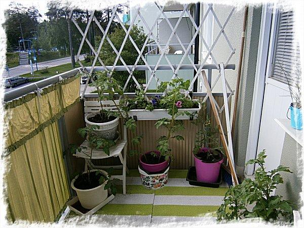 Blomlåda nr 3 + tomater och potatis