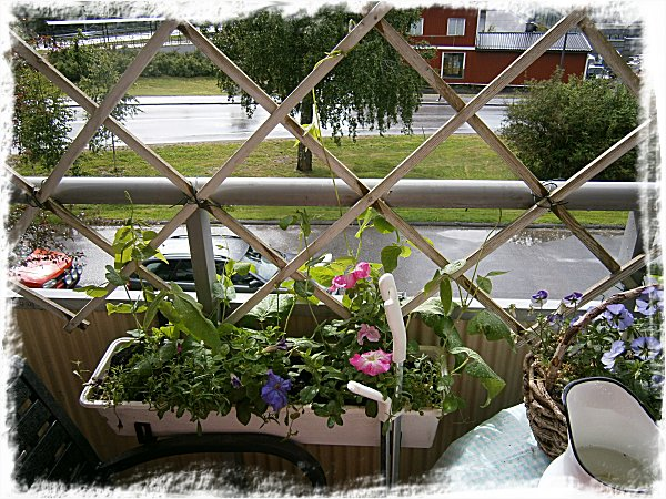 En av balkonglådorna