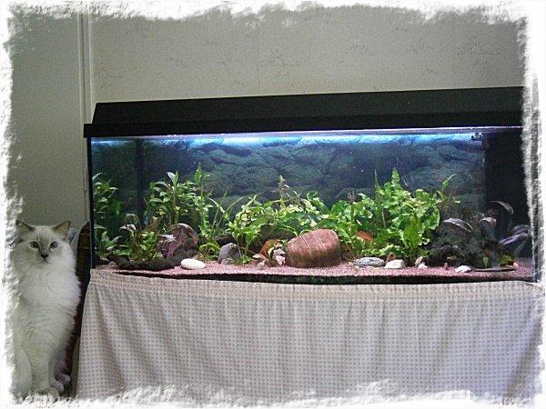 Akvariet just nu (och Måns)