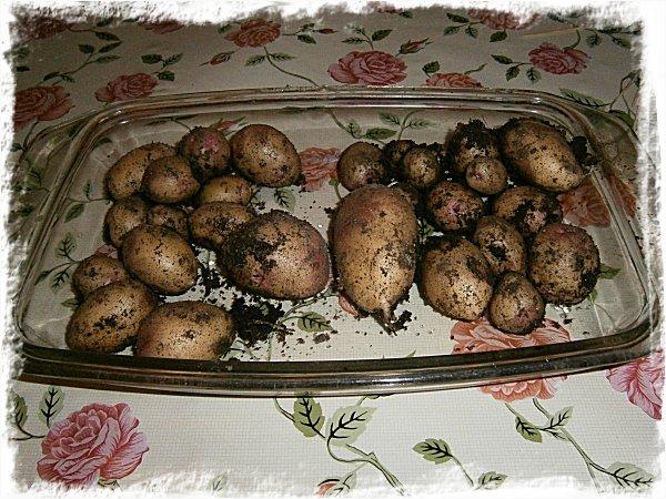 Egenodlad potatis