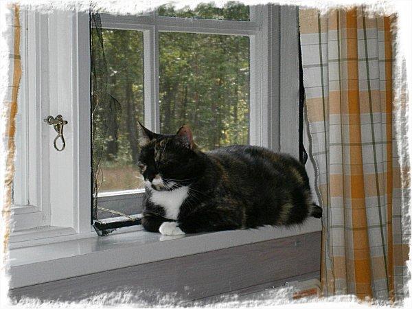 Smulan i fönstret