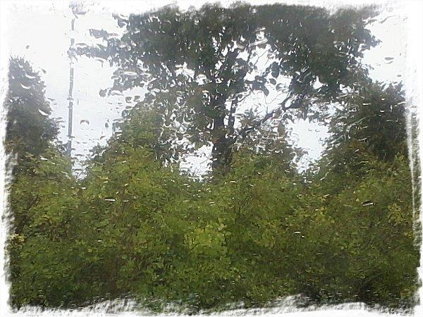 Regnblöt bilruta