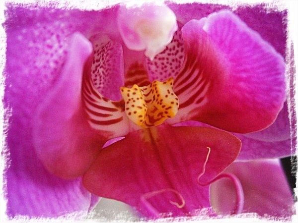 Närbild av den lila