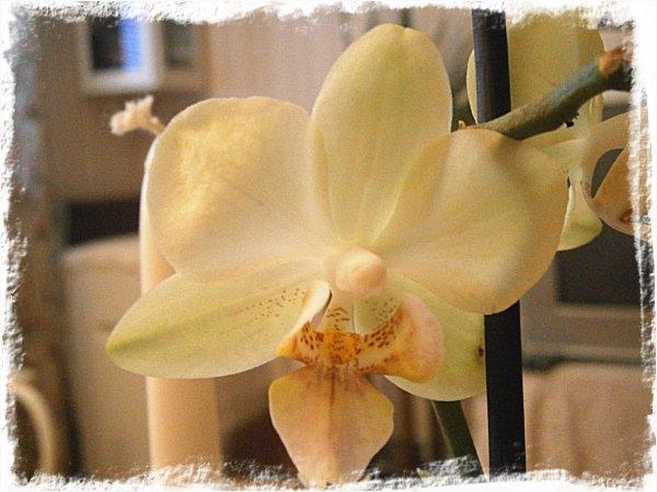 Orkidé nr 8 i samlingen